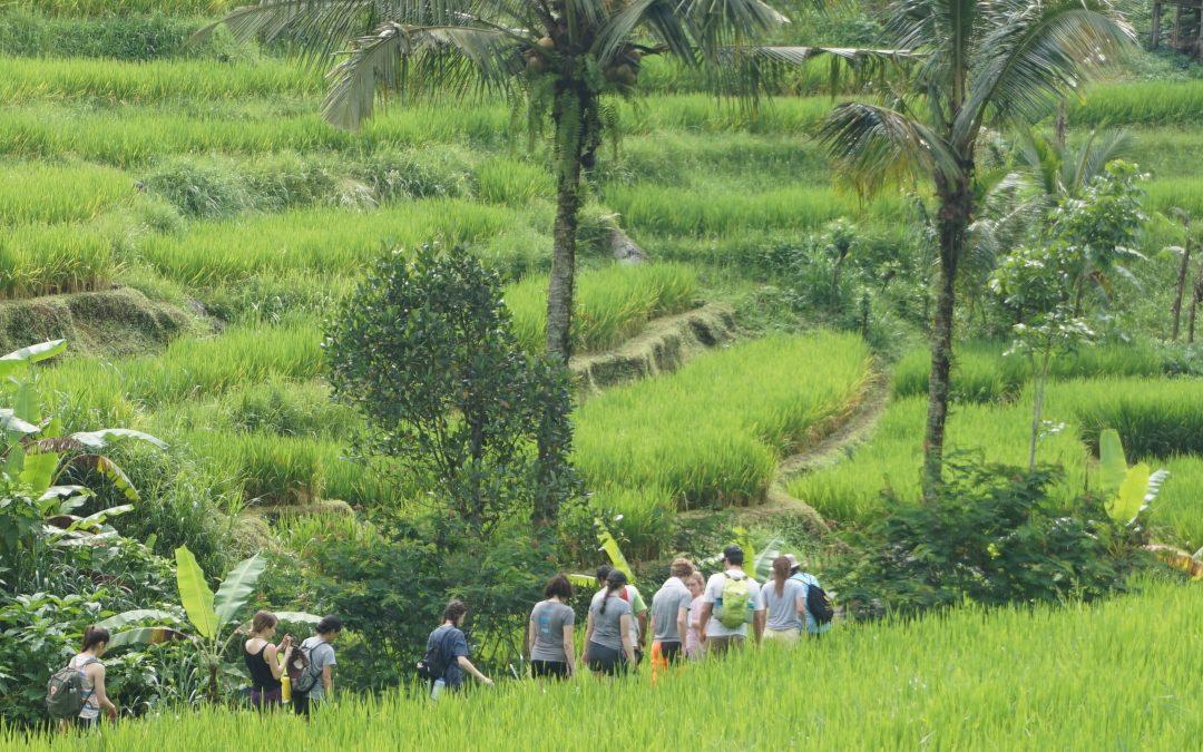 Bali's Secrets Amazing Race for families